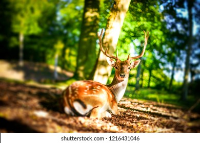 Deer looking surprised in a forest clearing with fresh green trees in the spring