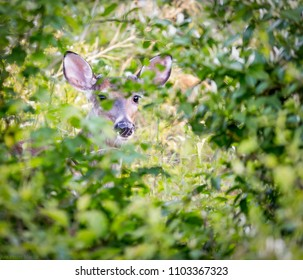 Deer Looking Through The Forest