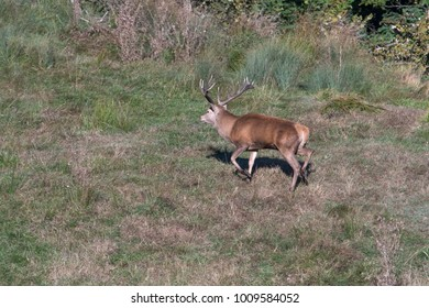 Deer mating season