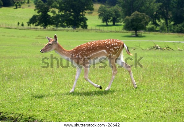 Deer in middle of field