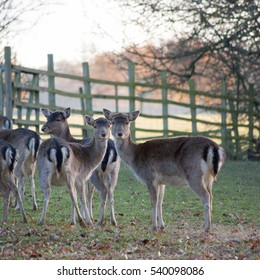 Deer mirroring each other as they look at the camara.