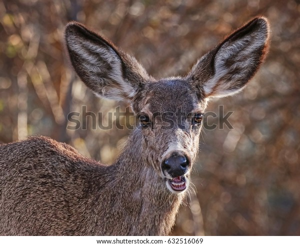 a deer munching on grass in a local park