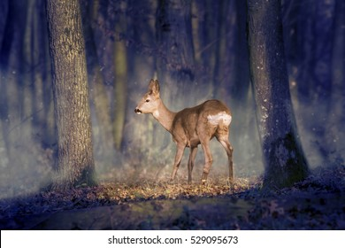 Deer in a mystic forest
