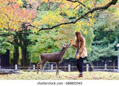 The deer of Nara at fall season, Nara Japan