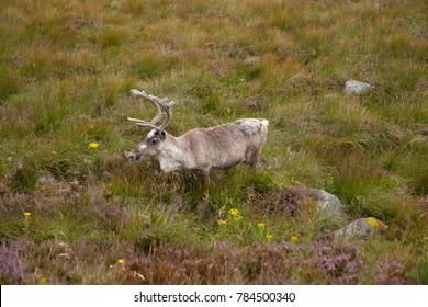 Deer in a National Park
