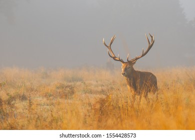 Deer in the nature early morning