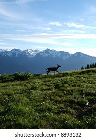 Deer in Olympic National Park