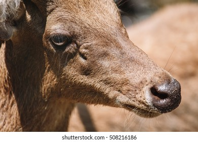 Deer on Bali, Zoo in Indonesia, Nature travel background