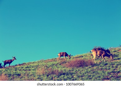 Deer on a hillside in California. Saturated image with wild animals.