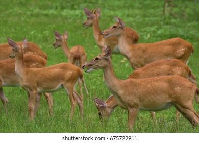 Deer on the meadow. Beautiful deer.