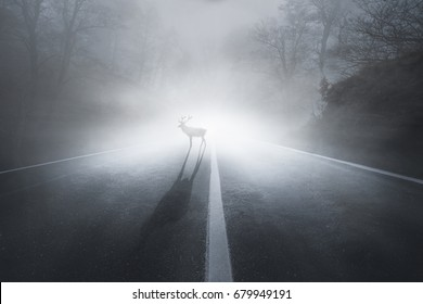 Deer on a road at fog in autumn