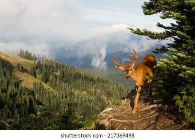 Deer on Sunrise Point Trail