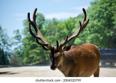 Deer in parc omega, Ontario