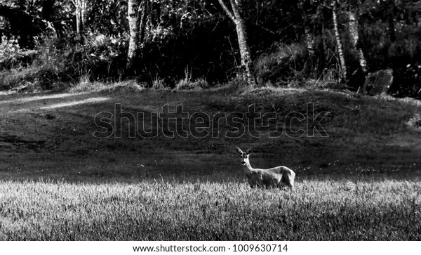 A deer passing by