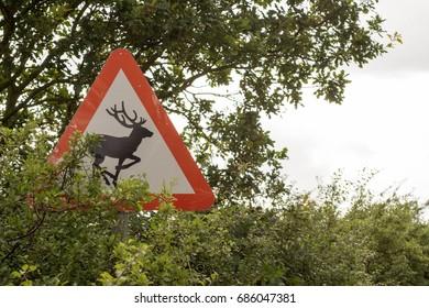 Deer Road Sign