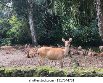 Deer in Safari Garden Indonesia