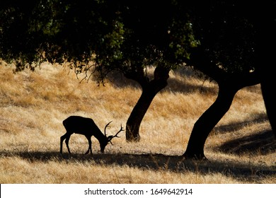 Deer silhouette in a forest with hard light in summer.