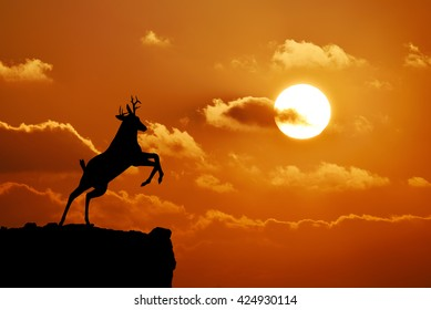 deer silhouette on the mountain at sunset