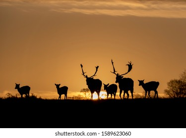 deer silhouettes against the early morning sky