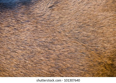 Deer skin texture.