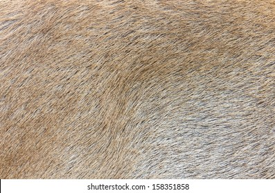 Deer skin texture