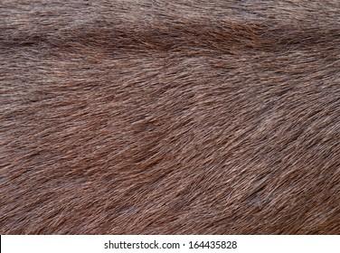 Deer skin texture background