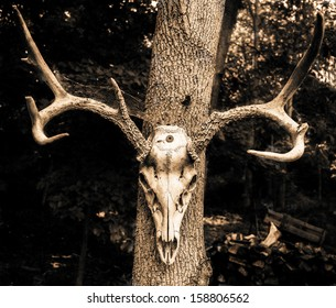 Deer skull and antlers mounted on a tree.