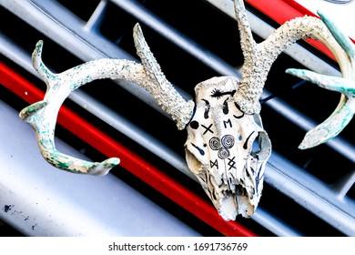 Deer skull with black markings on car grill
