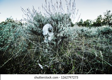 a deer skull placed in the middle of sagebrush in the high desert of Colorado