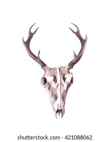 Deer skull. Watercolor