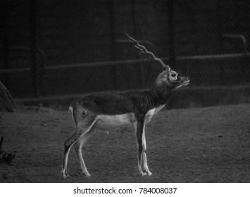 A deer standing in isolation