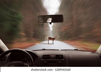 deer standing on the road