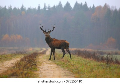 The deer standing on the road