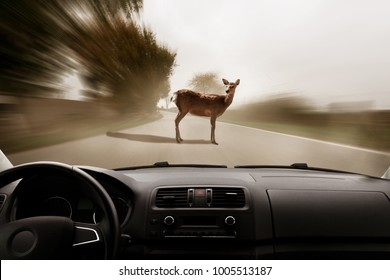 deer standing on the road near a forest