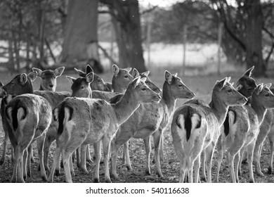 deer standing together as rain begins to fall