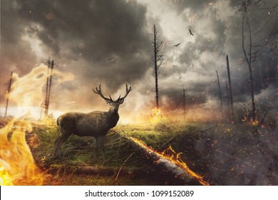 Deer stands in burning forest