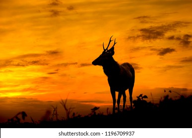 Deer stands on the hill at dusk.