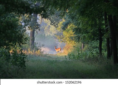 deer stands on sun rays in forest