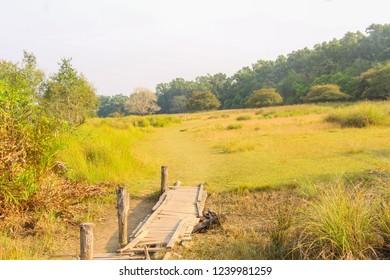 Deer in Sundarbans