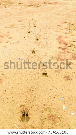Deer tracks trail on sand in Kentucky -Nature photography fall 2018