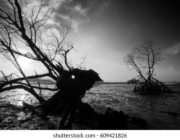 The Deer Tree. Black and white silhouette of tree and roots.