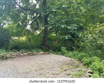 deer and trees and a stone wall