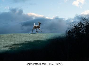 Deer Trotting in Meadow at Sunrise