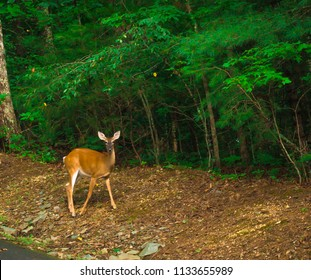 Deer watching diligently with ears perked up surrounded by green trees