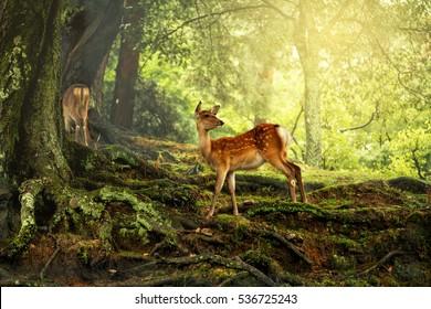 Deer in the wild of natural park nara museum japan