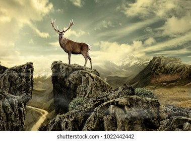 deer in wild nature-photo manipulation