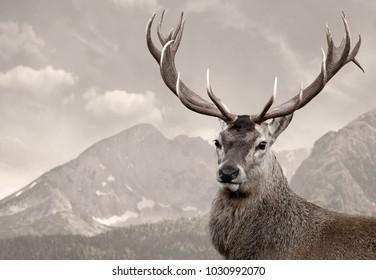 Deer in wildness