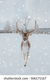 deer in winter, in heavy snow.