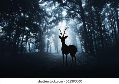 Deer in woods. Atmospheric forest wildlife landscape with deer silhouette in fog