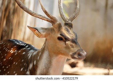 Deer Zoo Animals